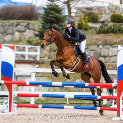 Чемпионат среди любителей и Первенство среди всадников на лошадях до 150 см в холке прошли в минувшие выходные, фото 7