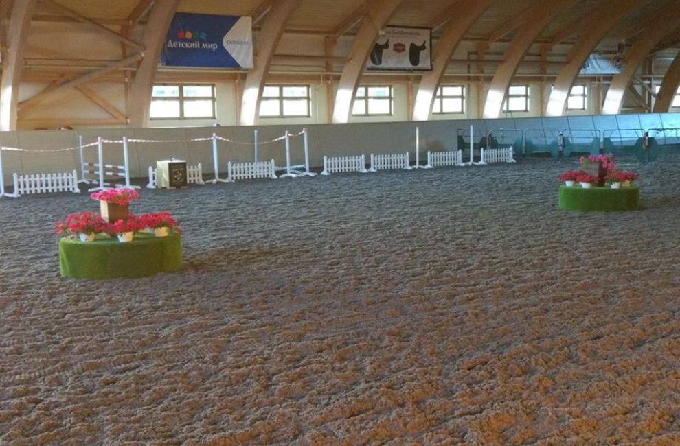 Уже сегодня! Открытый Фестиваль спортивных пород пони в КК «Форсайд»