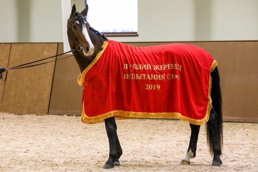 Завершились Испытания племенных лошадей верховых пород спортивного направления и Кубок среди молодых лошадей по выездке
