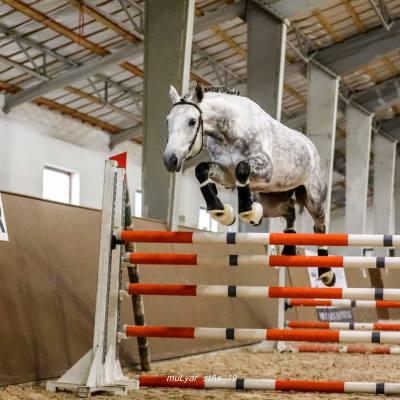 Завершились Испытания племенных лошадей верховых пород спортивного направления и Кубок среди молодых лошадей по выездке, фото 2