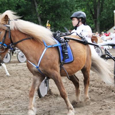 Завершился Второй Всероссийский пони-форум, фото 15